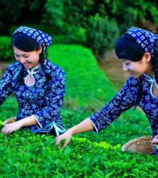 Чай по странам произрастания